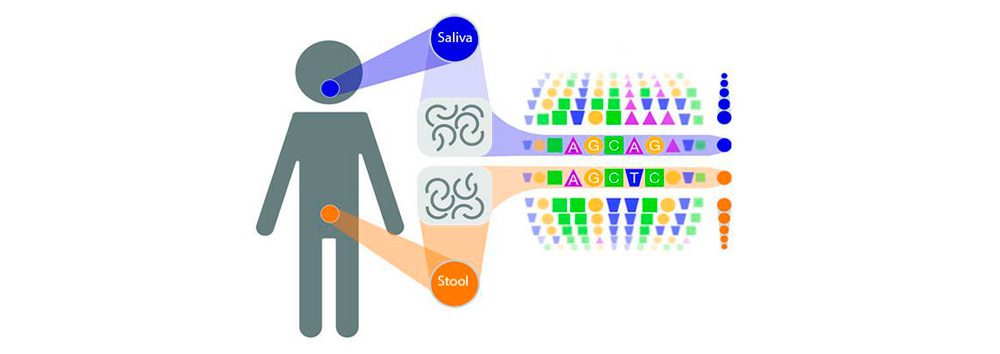 Many gut microbes may originate in the mouth
